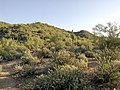 Butcher Jones Trail - Mt. Pinter Loop Trail, Saguaro Lake - panoramio (42).jpg