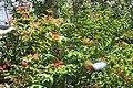 Butterfly Rainforest FMNH 46.jpg