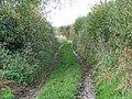Byway near Trent - geograph.org.uk - 1566185.jpg
