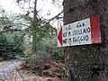 CAI 107 Faggia del Chiodo Segnavia.jpg