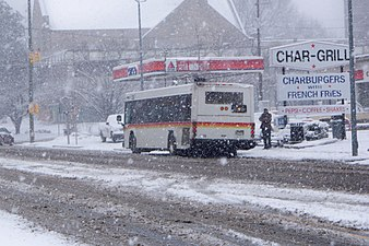 CAT BUS Snowy Day.jpeg