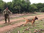 COPE NORTH 17 Brings Aussies and their Dogs 170224-N-AW818-002.jpg