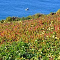 Cabo da Roca, Portugal - panoramio (2).jpg