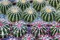 Cactus (8313244902).jpg