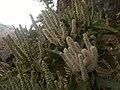 Cactus in spread.jpg