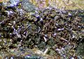 Calderonite-109573.jpg