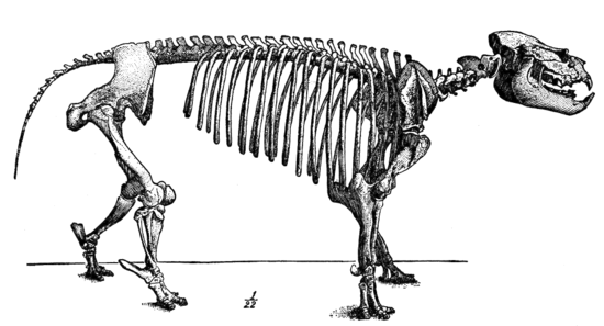 Cambridge Natural History Mammalia Fig 136.png