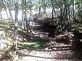 Camino Reales Sitios, sol y arboleda, San Ildefonso, Segovia, España, 2014.jpg