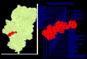 Campo de Daroca - Location of the municipalities in Campo de Daroca