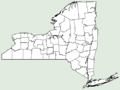 Carduus pycnocephalus NY-dist-map.png