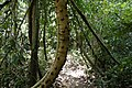 Cat Tien Park, Vietnam, lowland tropical forest.jpg