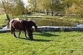 Cavalli al pascolo presso Juvanum - panoramio.jpg