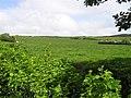 Cawan Hill - geograph.org.uk - 1341068.jpg