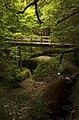 Cawdor Castle forest.jpg