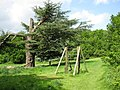 Cedar and Climbing Frame, South Hill Park - geograph.org.uk - 1309828.jpg