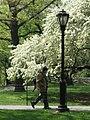 Central Park NYC - Spring 2003.jpg