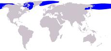 En color azul la distribución de la ballena de Groenlandia