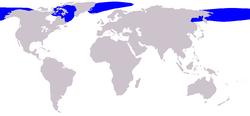 Bowhead whale range