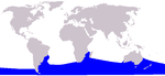 Southern right whale range