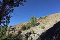 Cheshme gokeshoo - panoramio.jpg