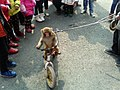 Chinese Monkey Riding Bicycle.jpeg