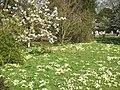 Churchyard of St Katherines in Exbury - geograph.org.uk - 387046.jpg