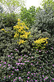 City of London Cemetery - flowering shrubs 04.jpg