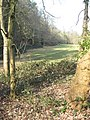 Clearing on common - geograph.org.uk - 1210495.jpg