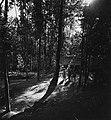 Collectie NMvWereldculturen, TM-20000837, Negatief, 'Dessa Pakem tussen Yogyakarta en Kaliurang', fotograaf Boy Lawson, 1971.jpg