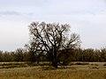 Colorado 2013 (8569928985).jpg