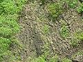 Columnar Basalt - panoramio (4).jpg
