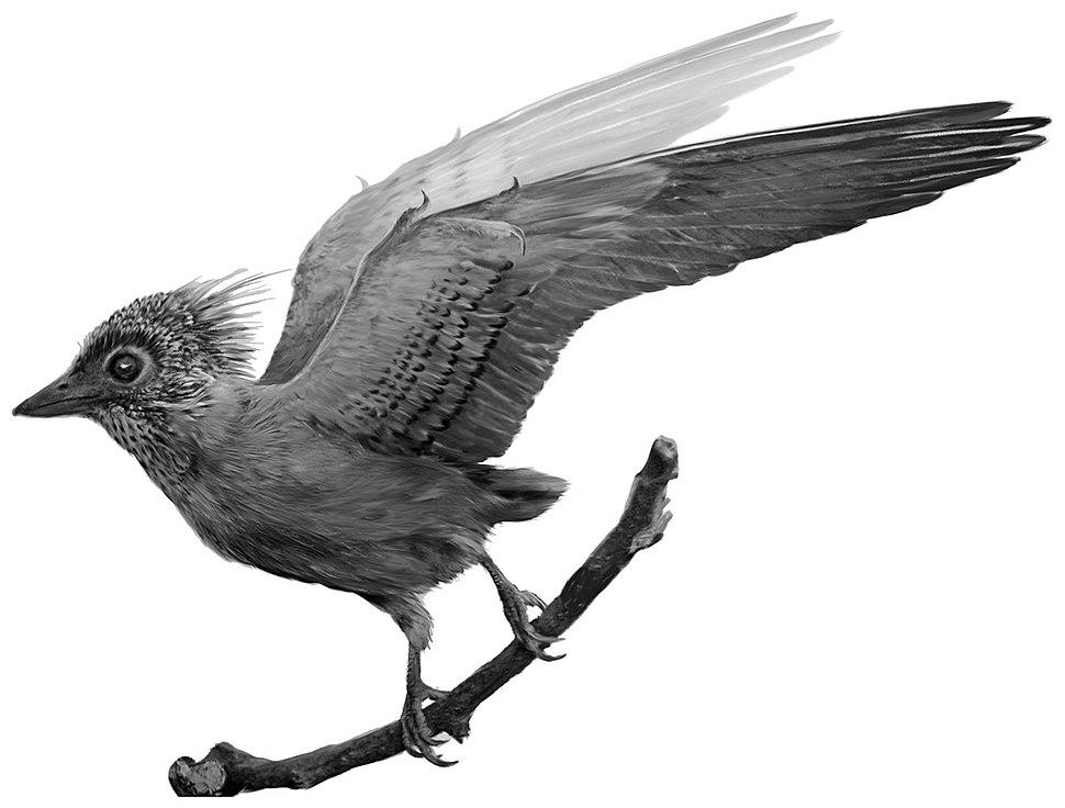 Confuciusornis plumage pattern