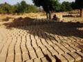 Construction de briques à Péyiri.png