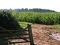 Corn field near Columbjohn - geograph.org.uk - 965865.jpg