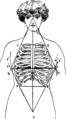 Corset1908 028Fig10.png