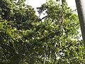 Costa Rica (6110134538).jpg