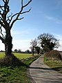 Country lane from Metton to Hanworth - geograph.org.uk - 715238.jpg
