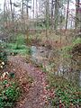 Creek with woods at Fallon Park in Raleigh, North Carolina.jpg