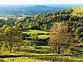 Crickley Hill, near Witcombe - geograph.org.uk - 1239173.jpg