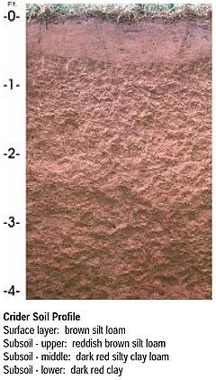 Crider soil USDA NRCS profile.jpg