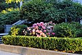Crocker Art Museum flower bed - panoramio.jpg