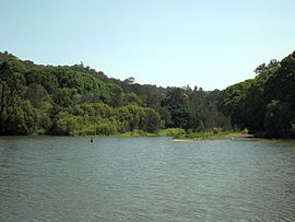 Currumbin Creek at Robert Neumann Park in Currumbin Valley, Queensland.jpg