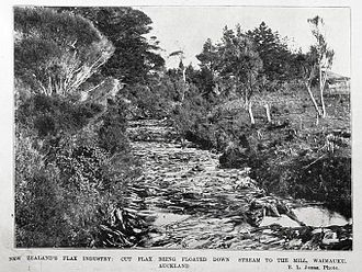 Flax in New Zealand - 1902 cut flax being floated downstream to the mill at Waimauku AWNS-19021009-2-4