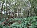 Cypress Wood - geograph.org.uk - 1380496.jpg