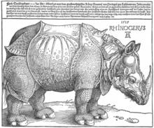Rhinocerus, Holzschnitt (1515) (Quelle: Wikimedia)