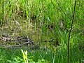 DSC02276 am Teich zur Aufzucht autochthoner Fischarten.jpg