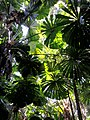 Daintree National Park, Queensland 13.jpg