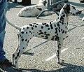 Dalmatien alpha lors d'une expo.jpeg