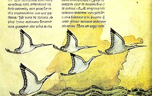 Particolare del folio 16 recto del trattato De arte venandi cum avibus.