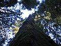 Dead Standing Tree.jpg